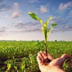 La Lombardia stanzia 12 milioni per l'agricoltura biologica