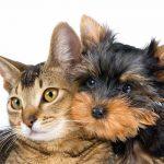 Arriva la mutua per cani e gatti. Scopriamo costi e benefici