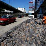 Non si ferma il commercio clandestino delle pinne di squalo