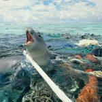 I rifiuti marini uccidono la fauna, danneggiano la pesca e compromettono il turismo
