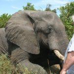 Gli elefanti sono i mammiferi più nottambuli