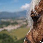 Alla scoperta dei parchi a cavallo. Al via la campagna di Legambiente e Turismo a cavallo