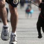 """Anche i cani potranno correre domenica la """"Strabologna"""""""