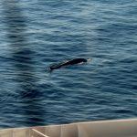Il ritorno delle balene nel Mediterraneo centrale