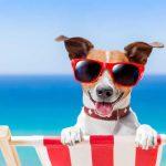 Cani e gatti in vacanza? Metà degli italiani li vuole con sé
