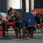 """Basta ai cavalli per trasportare i turisti. Verdi contro Raggi: """"mantenga promesse, vieti botticelle..."""