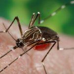 I virus emergenti che minacciano i viaggiatori: Zika, Ebola e Mers