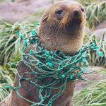 La plastica che soffoca l'Antartide