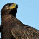 Big bird: una nuova specie in due sole generazioni
