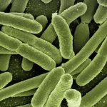 La sensibilità dei batteri agli antibiotici
