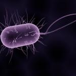 Arruolare batteri e fibre intestinali per combattere il diabete