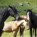 I cavalli ricordano le espressioni delle persone
