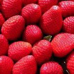 Il primato delle fragole in materia di pesticidi