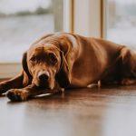 Il cane continuava ad annusarle un punto del naso: era un tumore