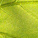 Imitare la fotosintesi per produrre combustibile