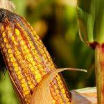 11 alimenti da evitare per ridurre il rischio d'infiammazione