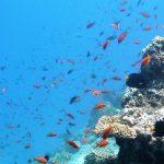 Le conseguenze del riscaldamento dei mari