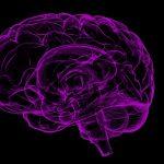 I segreti del nostro cervello