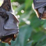 Lampioni amici dei pipistrelli