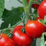 10 superfood a misura di giardino