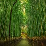 Shinrin-yoku: curarsi con la natura