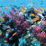 Un corallo che batte il riscaldamento globale