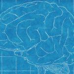 La Rhazya stricta  protegge il cervello