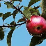 C'è un rapporto tra mela e colesterolo?