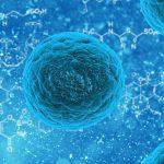 La chemioterapia lavora a livello mitocondriale