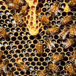 Un alveare urbano per salvare le api