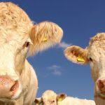 Come proteggere l'ambiente dai gas intestinali degli animali