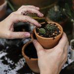 FARMacy: il giardinaggio che fa miracoli per l'umore
