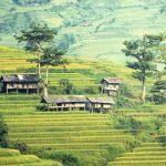 Bamboo terrace homes: un progetto per la Malesia