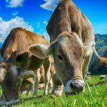 Peptidi del latte e salute