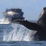 Balene VS barche
