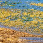 Alghe VS Carbonio