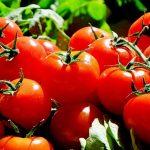 Lo stoccaggio dei pomodori nigeriani
