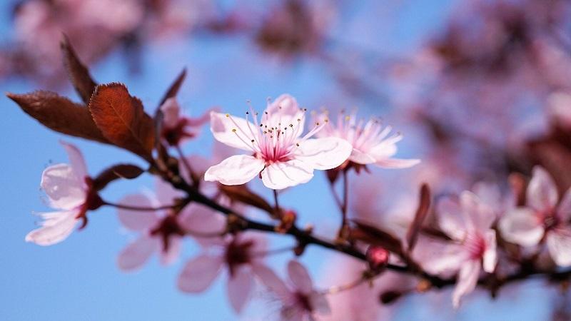 Strega comanda color: fiore di ciliegio!