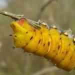 Vermi gialli che mangiano plastica (e non solo)